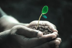 It´s World Environment Day – Here are 5 Proposal Tips
